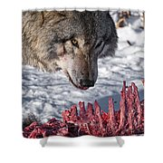 Timber Wolf Pictures 552 Shower Curtain