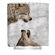 Timber Wolf Pictures 775 Shower Curtain