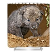 Timber Wolf Pictures 782 Shower Curtain