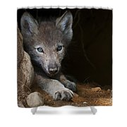 Timber Wolf Pictures 875 Shower Curtain