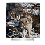 Timber Wolf Pictures 957 Shower Curtain by World Wildlife Photography