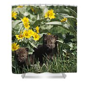 Timber Wolf Pups And Flowers North Shower Curtain