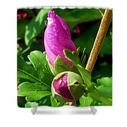 Time Will Come Shower Curtain