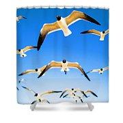 Timeless Seagulls Shower Curtain