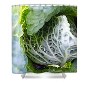 Tinted Tracery  Shower Curtain
