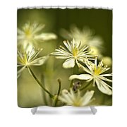 Tiny And Delicate Shower Curtain