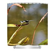 Tiny Blue-eyed Dragon Shower Curtain