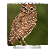 Tiny Burrowing Owl Shower Curtain