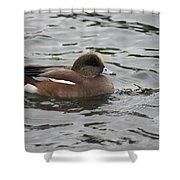 Tiny Duck  Shower Curtain