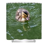 Tiny Duckling Shower Curtain