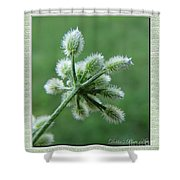 Tiny Flower Head Before Bloom Shower Curtain