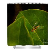 Tiny Fly Shower Curtain