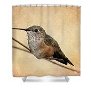 Tiny Hummingbird Resting Shower Curtain