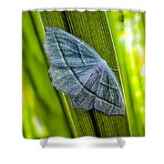 Tiny Moth On A Blade Of Grass Shower Curtain by Bob Orsillo