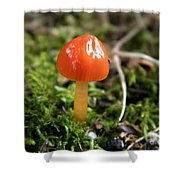 Tiny Orange Mushroom Shower Curtain