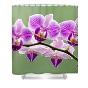 Tiny Orchid Faces Shower Curtain