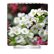 Tiny Pink And Tiny White Flowers 2 Shower Curtain