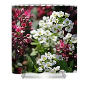 Tiny Pink And Tiny White Flowers Shower Curtain