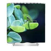 Tiny Praying Mantis On Sedum Shower Curtain