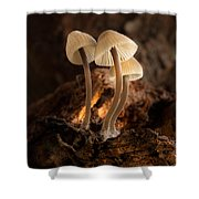 Tiny Toadstools Shower Curtain