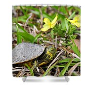 Tiny Turtle Close Up Shower Curtain