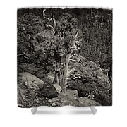 Tioga Pass Road Sepia Shower Curtain