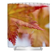 Tip Shower Curtain