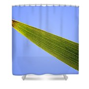Tip Of An Iris Leaf Isolated On Blue Shower Curtain