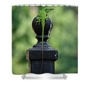 Tip To Tail Reverse Shower Curtain
