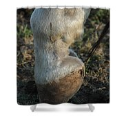 Tip Toeing Through The Fields. Shower Curtain