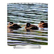 Tired Trio Shower Curtain