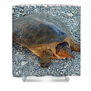 Tired Turtle Shower Curtain