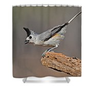Titmouse Preparing For Takeoff Shower Curtain