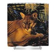 Tk0397, Thomas Kitchin Florida Panther Shower Curtain
