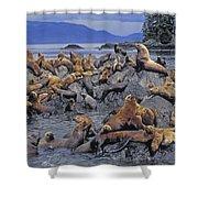 Tk0440, Thomas Kitchin Steller Sea Shower Curtain
