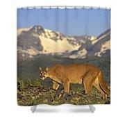 Tk0588, Thomas Kitchin Cougarmountain Shower Curtain