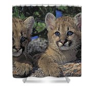 Tk0615, Thomas Kitchin Cougarmountain Shower Curtain
