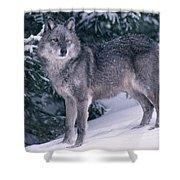 T.kitchin, 19821c Gray Wolf, Winter Shower Curtain