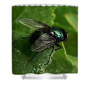 To Be The Fly On The Salad Greens Shower Curtain by Barbara St Jean