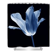 To The Light Tulip Flower In Blue Shower Curtain