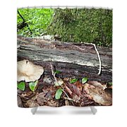 Toad 1 Shower Curtain