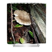 Toad 3 Shower Curtain