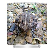 Toad Of Toad Hall Shower Curtain