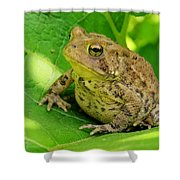 Toad Sitting Shower Curtain