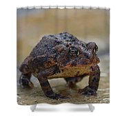 Toad Takes A Stance Shower Curtain
