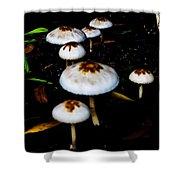 Toadstools V4 Shower Curtain by Douglas Barnard