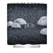 Toadstools V6 Shower Curtain by Douglas Barnard