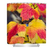 Toasted Autumn - Featured 3 Shower Curtain