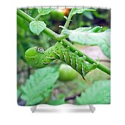 Tobacco Hornworm - Manduca Sexta - Six Spotted Hawkmoth Shower Curtain