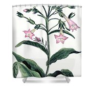 Tobacco Nicotiana Tabacum Shower Curtain